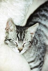 Bitte-nicht-stoeren: Katze beim Ausruhen