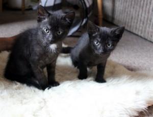 zwei schwarze Teufelchen