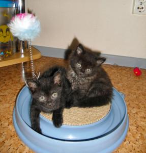 die Kätzchen Micky und Minnie